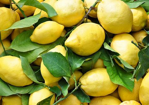 lemon_tour